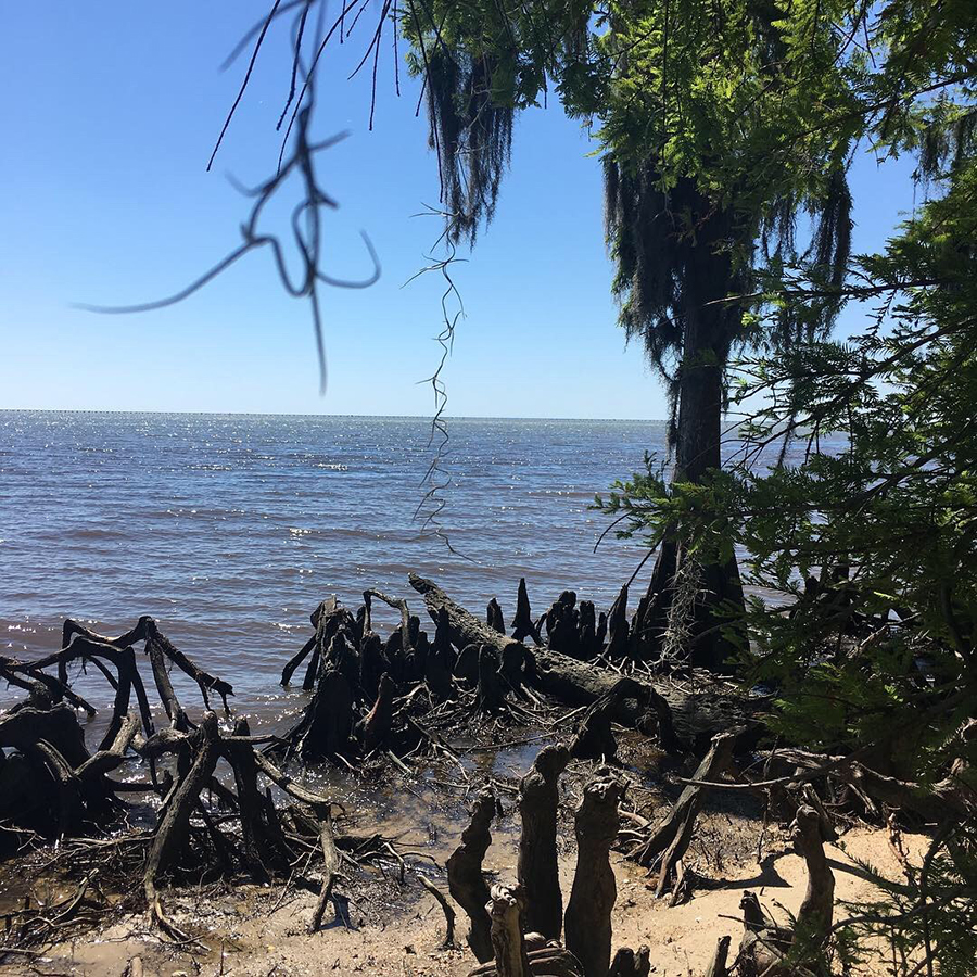 A view of Lake Pontchartrain from the Fontainebleau State Park Beach